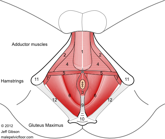 Male Pelvic Floor Advanced Massage And Bodywork